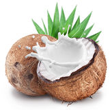 Coconut with milk splash inside. Stock Photos