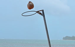 Coconut Netball. Coconut going through netball hoop.  Picture taken January 2014 Royalty Free Stock Photography