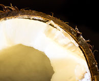Coconut. Nice exotic coconut close up on black background Royalty Free Stock Images