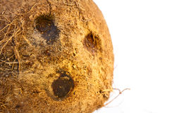Coconut. Nice exotic coconut close up on white background Stock Photos