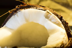 Coconut. Nice exotic coconut close up on yellow background Royalty Free Stock Photo