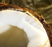 Coconut. Nice exotic coconut close up on yellow background Stock Photo