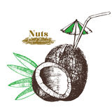 Coconut Nut Cocktail with Leaf Hand Draw Sketch. Vector stock illustration