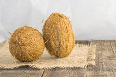 Coconuts on a rustic background. Coconut nuts, mature, on a rustic jute base on a wooden table with a white background Royalty Free Stock Images
