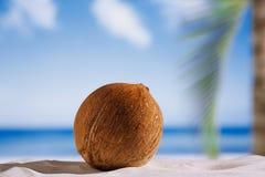 Coconut with ocean , beach and seascape Stock Photos