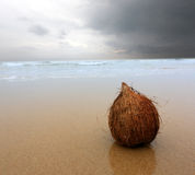 Coconut on ocean beach Royalty Free Stock Image