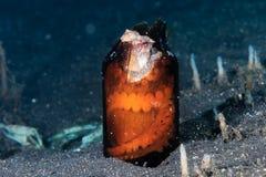 Coconut Octopus in a broken bottle Stock Photos