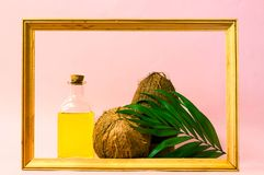 Coconut oil and fresh coconuts in wooden frame. Creative layout made of coconuts and leaves on pink background. Copy space stock photography