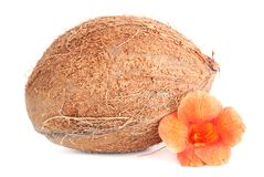 Coconut with orange  tropic flower isolated on white background Stock Photos