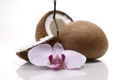 Coconut and orchids. Coconuts and orchids on white background Royalty Free Stock Photo