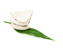 Coconut over the palm leaf Royalty Free Stock Photos