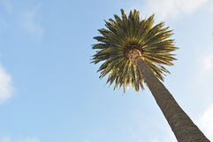 Coconut palm. Upwards look at Tropical coconut palm at blue sky Stock Photo