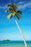 Coconut palm against blue sky Royalty Free Stock Images