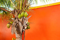 Coconut Palm Against Orange Building Stock Photos