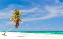 Free Coconut Palm At Beach Royalty Free Stock Images - 20623739
