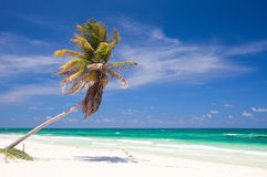 Free Coconut Palm At Beach Stock Photography - 20813112