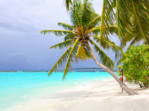 Coconut palm beach Stock Images