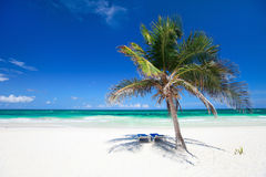 Coconut palm at beach Stock Photography