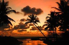 Coconut palm at the beach Stock Photos