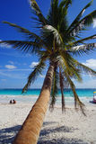 Coconut palm at beach Royalty Free Stock Photos