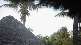 Coconut palm at the beach stock video