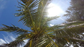 Coconut palm on the beach stock video footage