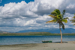 Coconut palm on Black Sand Beach, Caribbean Sea, Dominican Republic Stock Image