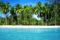 Coconut Palm and blue sea Stock Photography