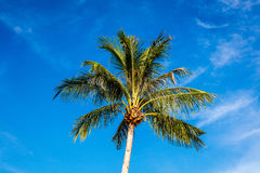 Coconut palm, Boracay Island, Philippines Stock Photo