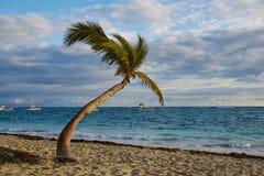 Coconut palm on the caribbean beach Stock Photo