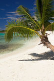 Coconut palm on caribbean sea Stock Image