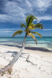 Coconut Palm and Caribbean Sea Stock Image