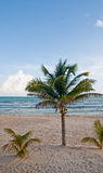 Coconut Palm on Empty Beach by Calm Sea Stock Photos