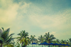 Coconut palm ( Filtered image processed vintage effect. ) Royalty Free Stock Images