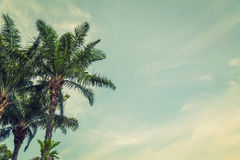 Coconut palm  ( Filtered image processed vintage effect. ) Royalty Free Stock Photos