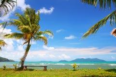 Coconut palm on island Stock Photos