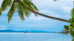 Coconut Palm on Kri Island, Homestay and Pier in Background. Raja Ampat, Indonesia, West Papua.  Royalty Free Stock Image
