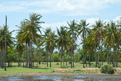 Coconut palm with lagoon Royalty Free Stock Photography