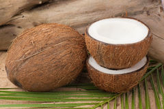 Coconut on palm leaf Royalty Free Stock Photo