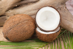 Coconut on palm leaf Royalty Free Stock Image