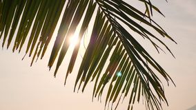 Coconut Palm Leaf Against Bright Morning Sun on Tropical Paradise Beach. Summer Tourism Vacation Holiday Concept. Background. 4K. Thailand stock footage