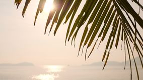 Coconut Palm Leaf Against Bright Morning Sun on Tropical Paradise Beach. Summer Tourism Vacation Holiday Concept. Background. 4K. Thailand stock video footage