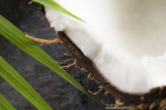 Coconut and palm leaf. exotic scene Royalty Free Stock Images