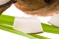 Coconut and palm leaf. exotic scene Royalty Free Stock Photo
