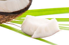 Coconut and palm leaf. exotic scene Stock Image