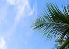 Coconut palm leaf on sky background. Summer vacation banner template with place for text. Stock Photo