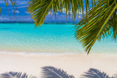 Coconut palm leafs in front of dreamy beach at an island in Mald Stock Photos