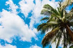 Coconut palm leaves against the sky Royalty Free Stock Images