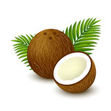 Coconut with palm leaves. Brown whole coconut with piece and leaves on white background. Vector illustration Stock Photos
