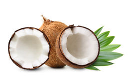 Coconut with palm leaves stock image